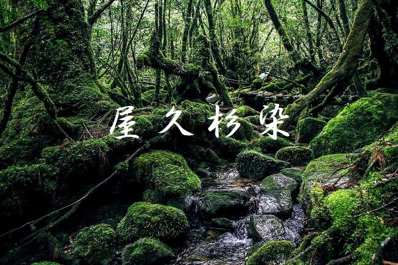 屋久杉染 大島紬